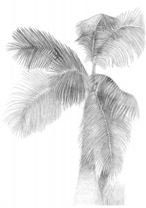 Drawing made in São Pedro das Serra, Rio de Janeiro, 2001.